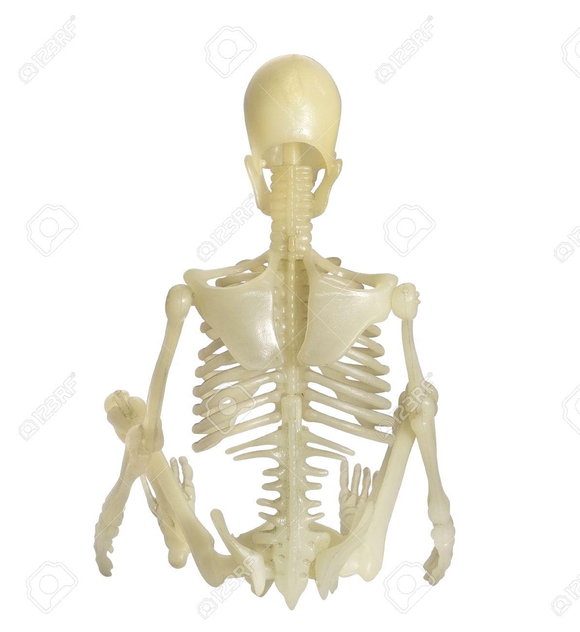 Groß Skelett Zurück Ideen - Menschliche Anatomie Bilder ...