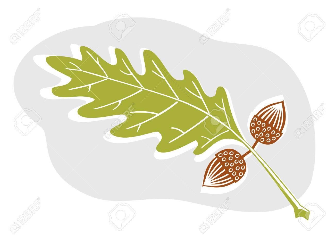 Oak Leaf And Acorn Drawing A sweet acorn and oak leaf