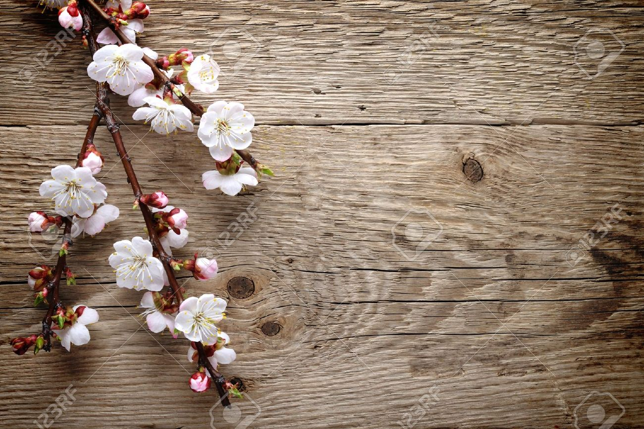 Spring blossom on wood background - 13290798