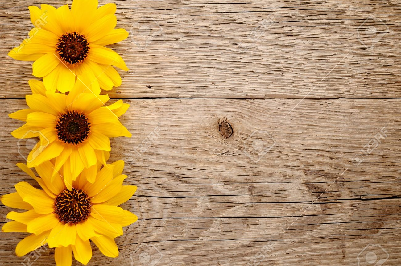 Ornamental sunflowers on wooden background - 15098407