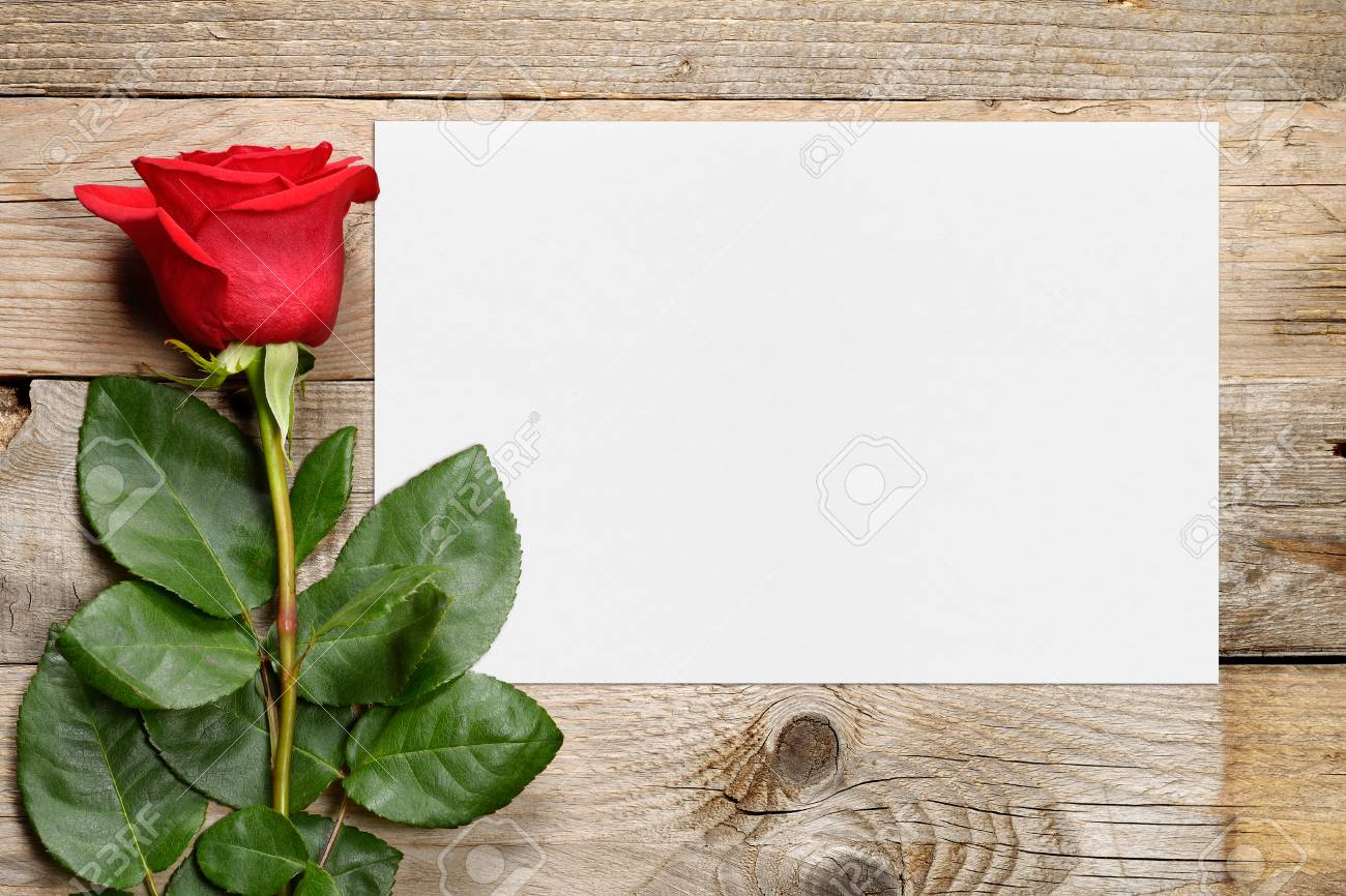 Red Rose And Blank Greeting Card Stock Photo Picture And Royalty