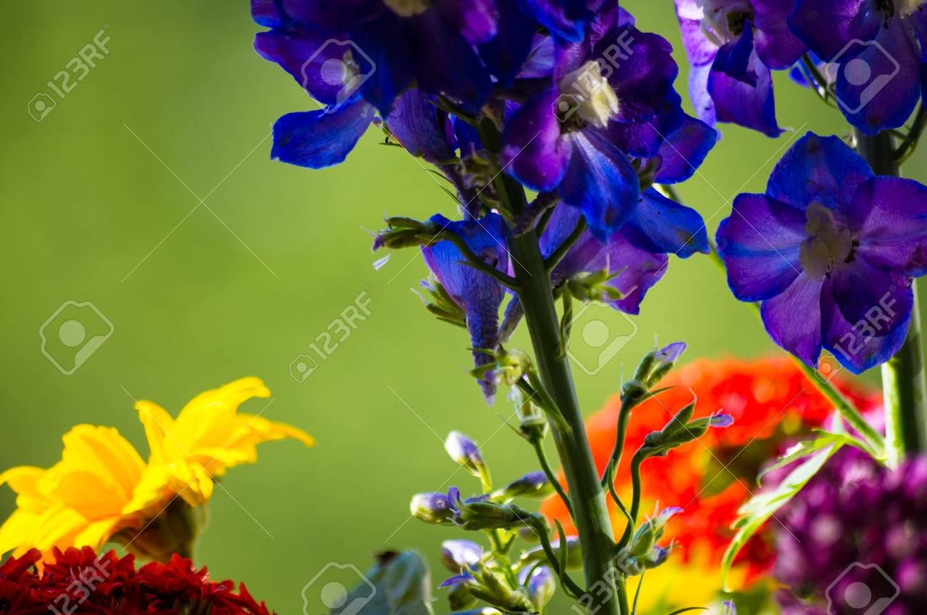 A Colorful Bouquet Of Bright Spring Flowers Of Various Types