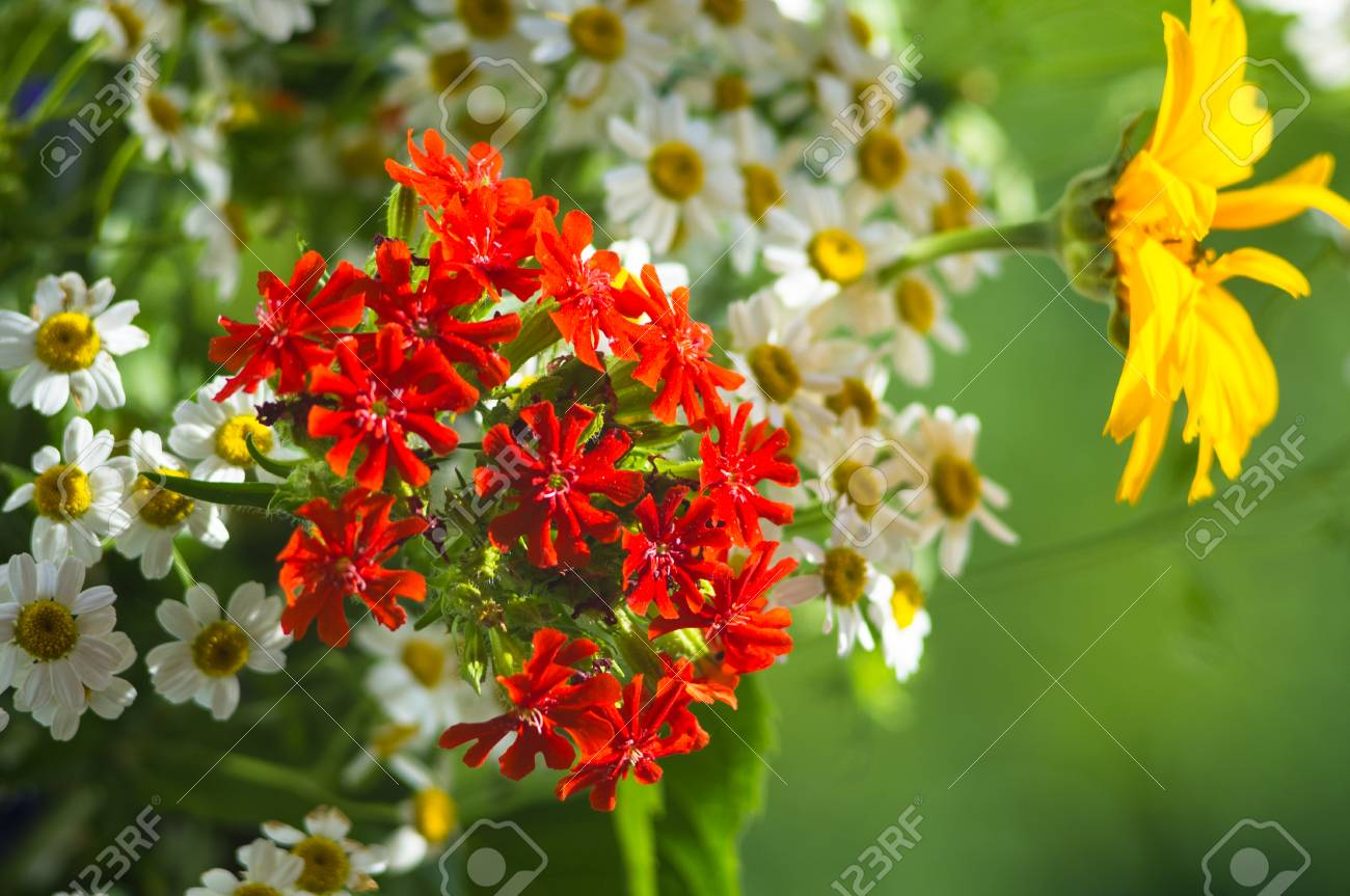 A colorful bouquet of bright spring flowers of various types a colorful bouquet of bright spring flowers of various types close up stock photo izmirmasajfo