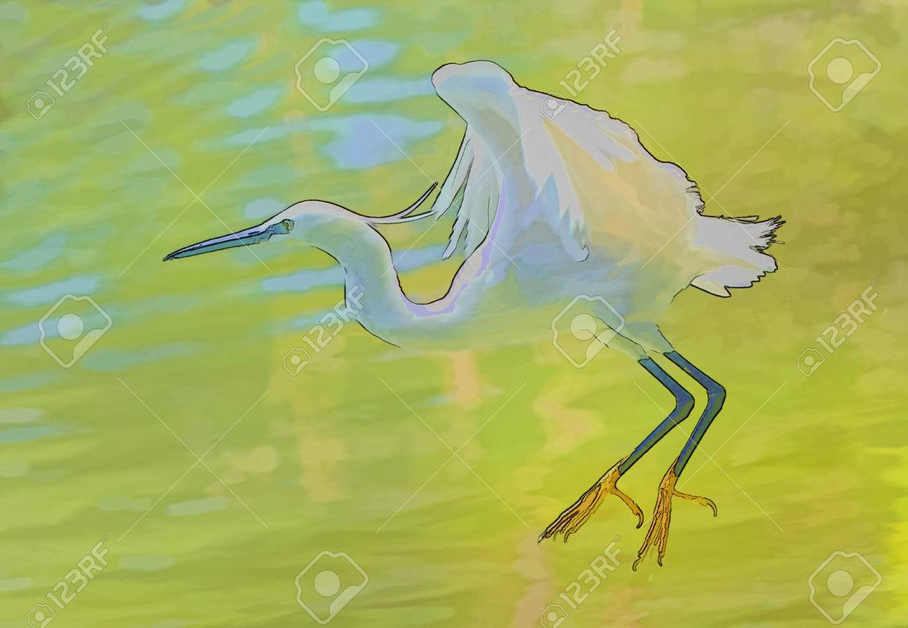 Digital Ink Drawing Of White Bird Cattle Egret Coming To Land