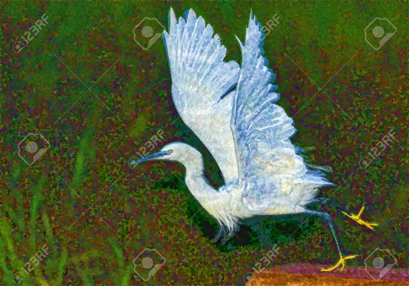 Digital Ink Drawing Of White Bird Cattle Egret Ltaking Off