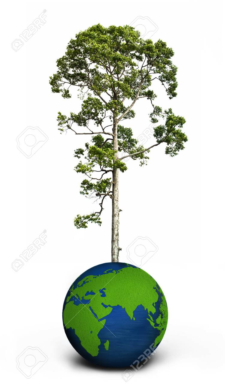 Baum Und Globus Auf Weissem Lizenzfreie Fotos Bilder Und Stock