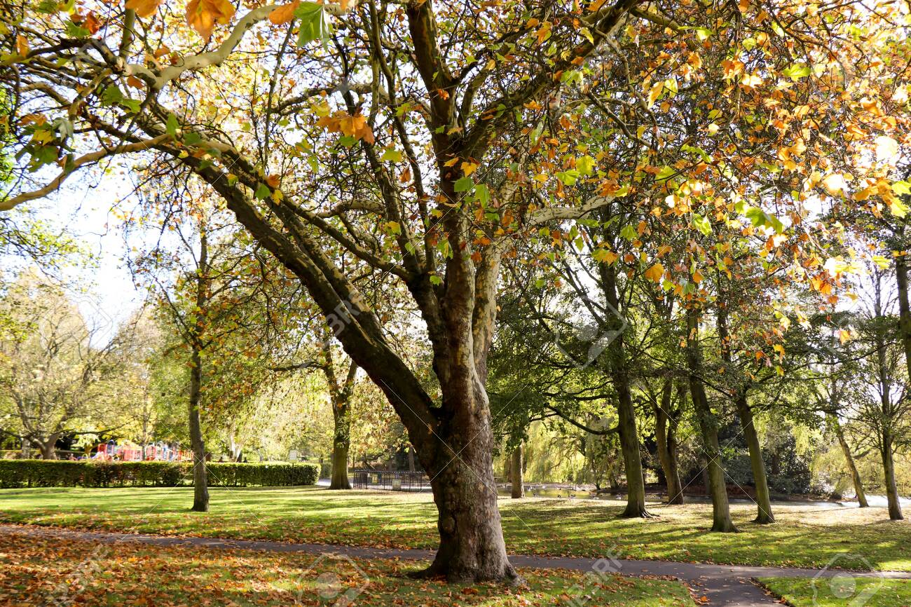 Victoria Park-English park landscape. A perfect place to relax - 151600027