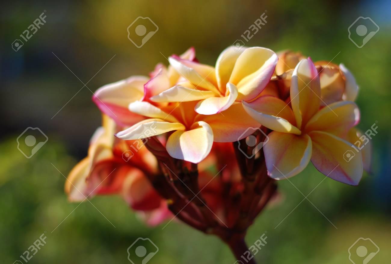 beautiful flower Stock Photo - 17192651