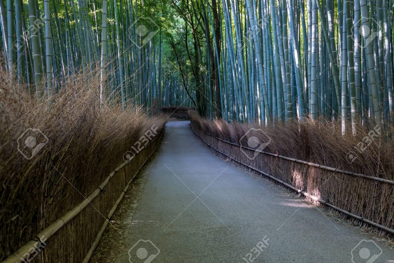 Bosco Di Bamb.Pista Di Bosco Di Bambu A Arashiyama In Giappone