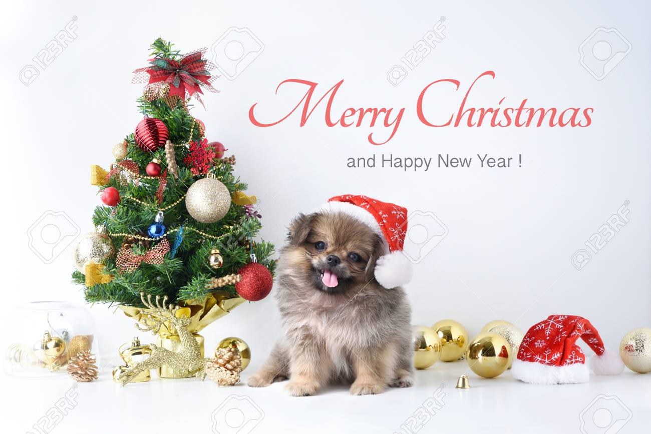 happy new year christmas dog in santa claus hat celebration stock photo picture and royalty free image image 91282437 123rf com