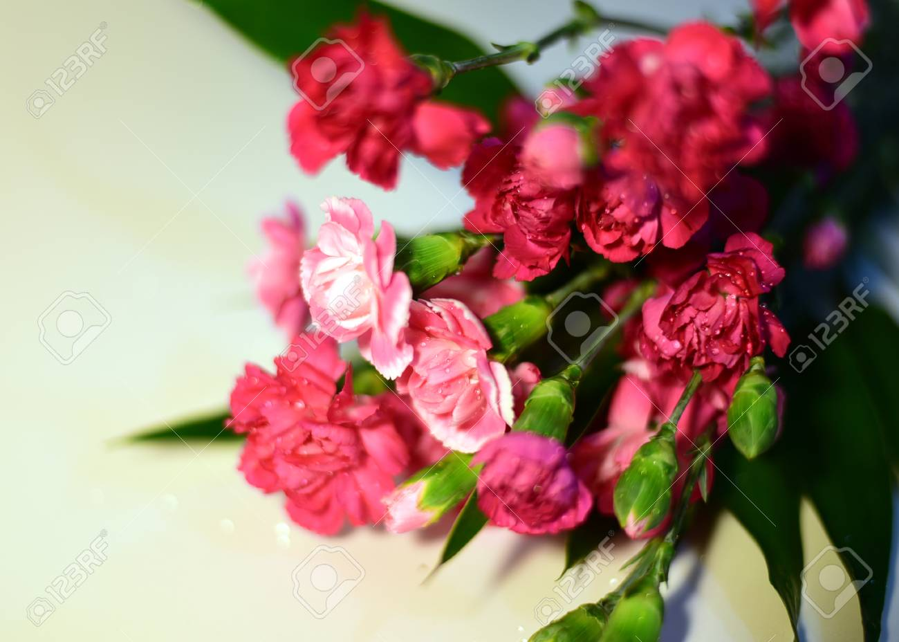 Spray Carnation Is One Of Carnation Types Which Is Mini Carnations