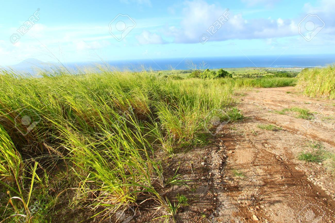 Dirt road running through the sugar cane fields of Saint Kitts Stock Photo - 8094295