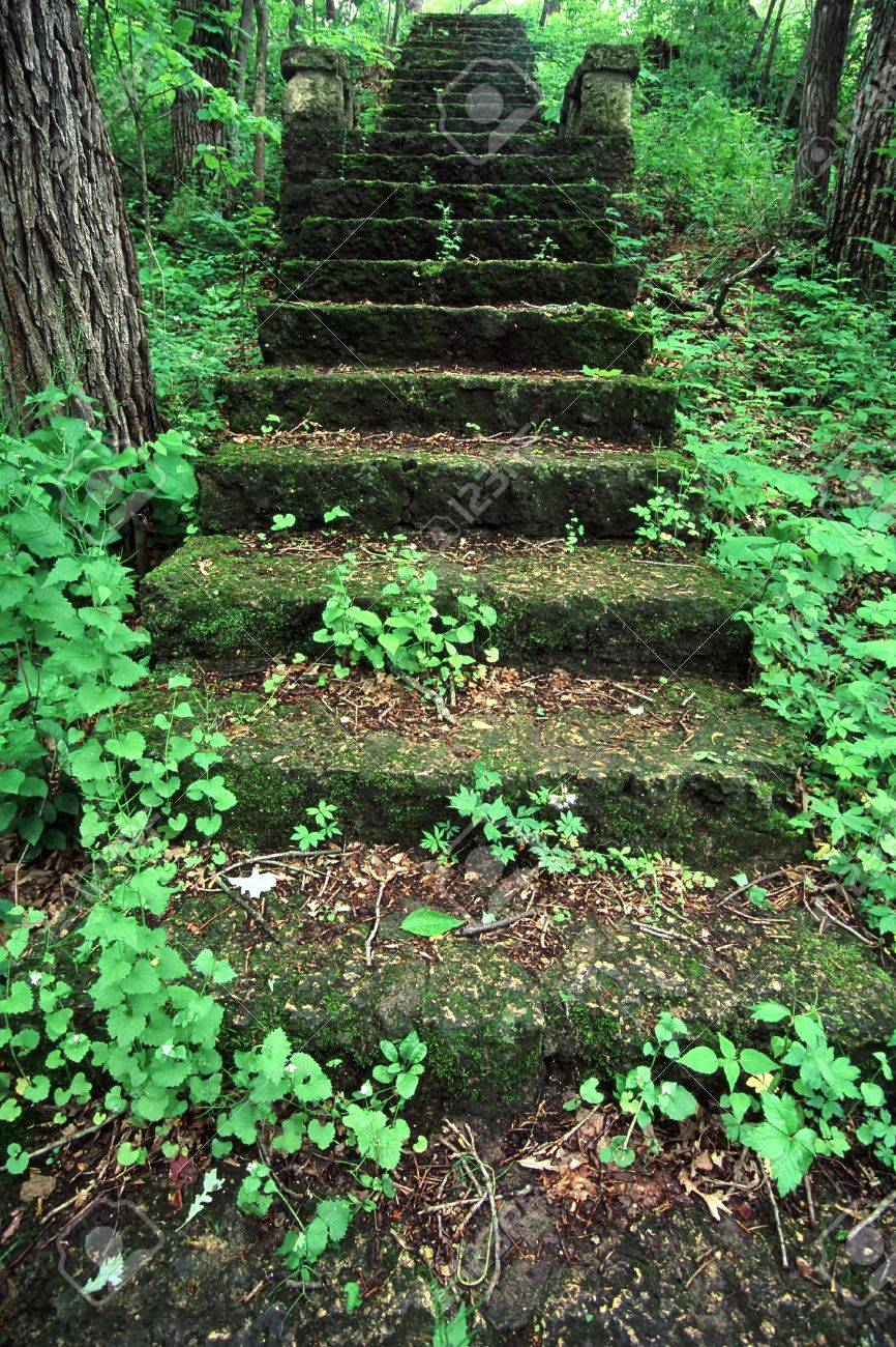 Old mossy stairs lead through a lush forest at Kilbuck Bluffs Forest Preserve in Illinois Stock Photo - 10510457