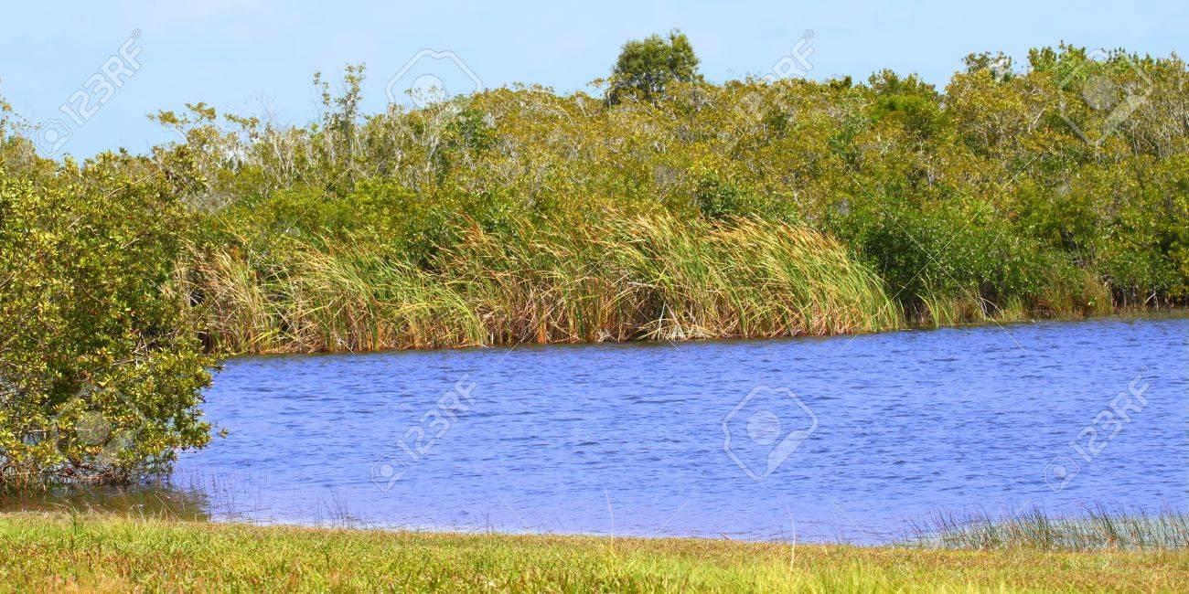 Beautiful scenery at Everglades National Park of Florida, USA Stock Photo - 13091554