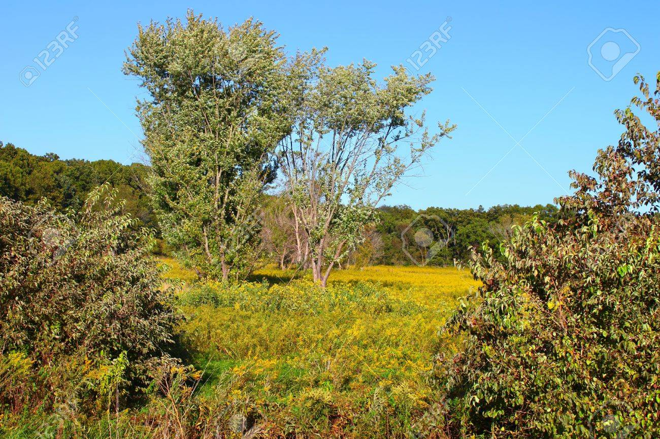 Prairie and forest scenery at Castle Rock State Park of Illinois Stock Photo - 14240177