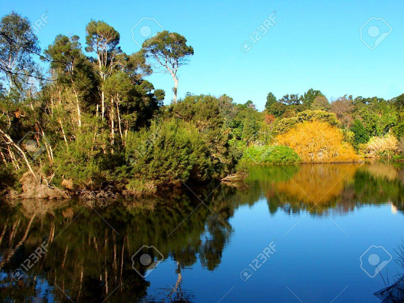 Lake in the Royal Botanic Gardens of Melbourne Australia Stock Photo - 16556975