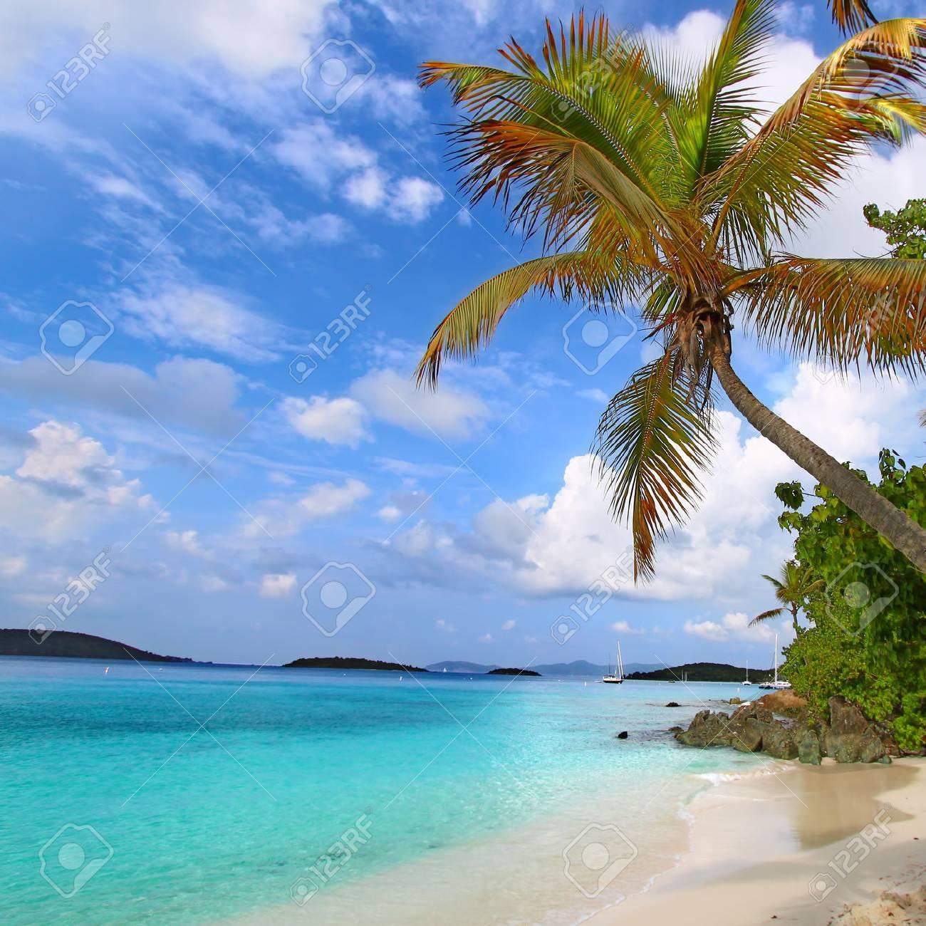 Palm tree over the beach of Saint John in the US Virgin Islands Stock Photo - 23461959