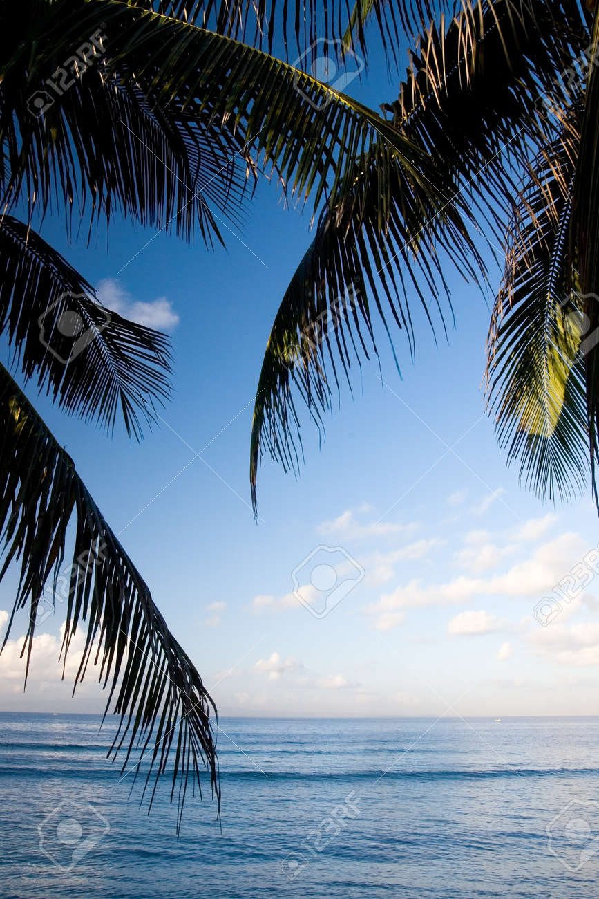 The beautiful scenery of a tropical beach with coconut leaves and blue sky background - 154289698