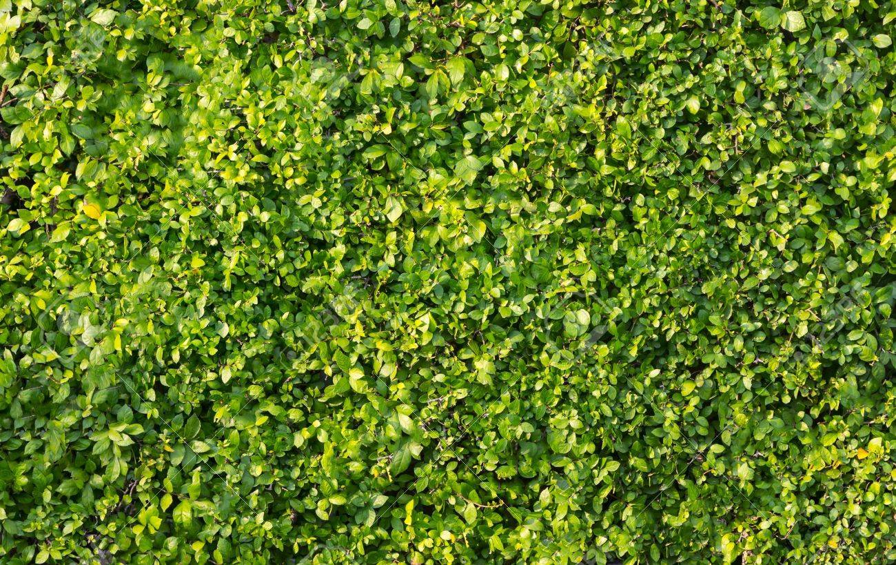 Green leaves wall background Stock Photo - 18199178