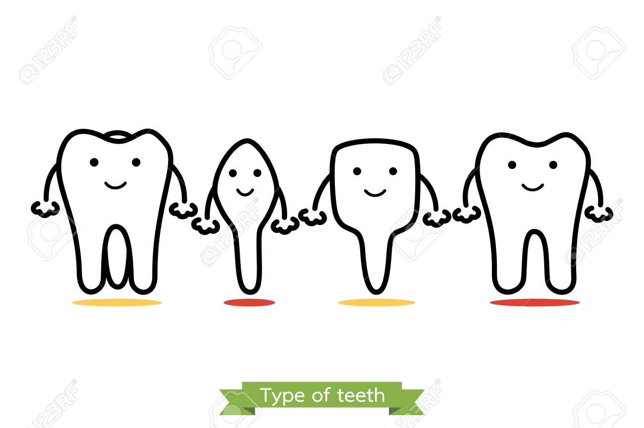 Tooth Type - Incisor, Canine, Premolar, Molar - Dental Cartoon ...