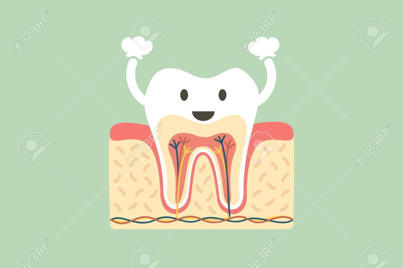 A Dental Cartoon Flat Vector, Healthy Tooth Anatomy Is Fun ...