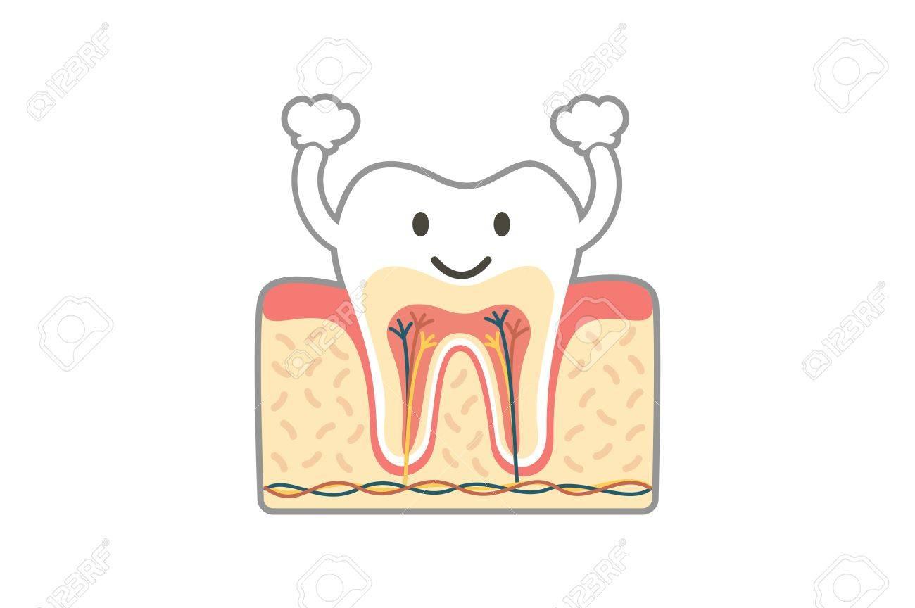 Dental Cartoon Flat Vector, Healthy Tooth Anatomy Is Fun Isolated ...