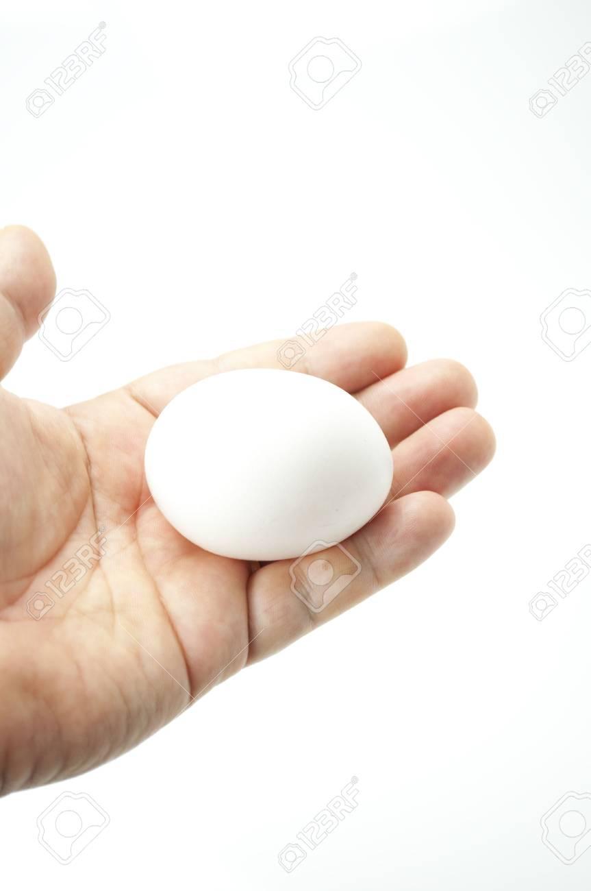egg Stock Photo - 7817719