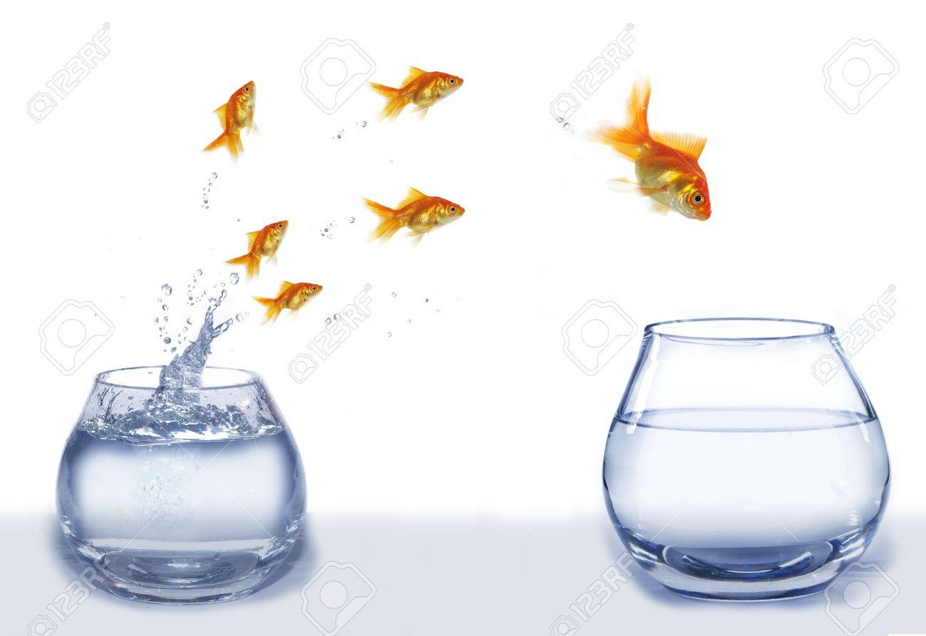 jump gold fish from aquarium to aquarium on white background - 5483649