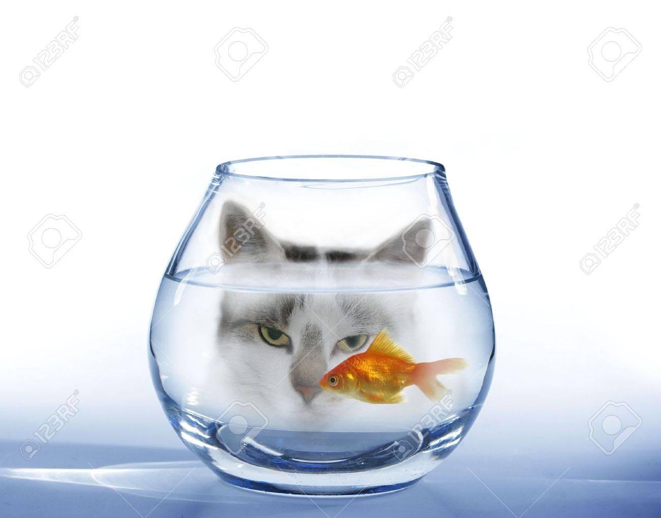 look at on swimming in aquarium fish cat - 5483653
