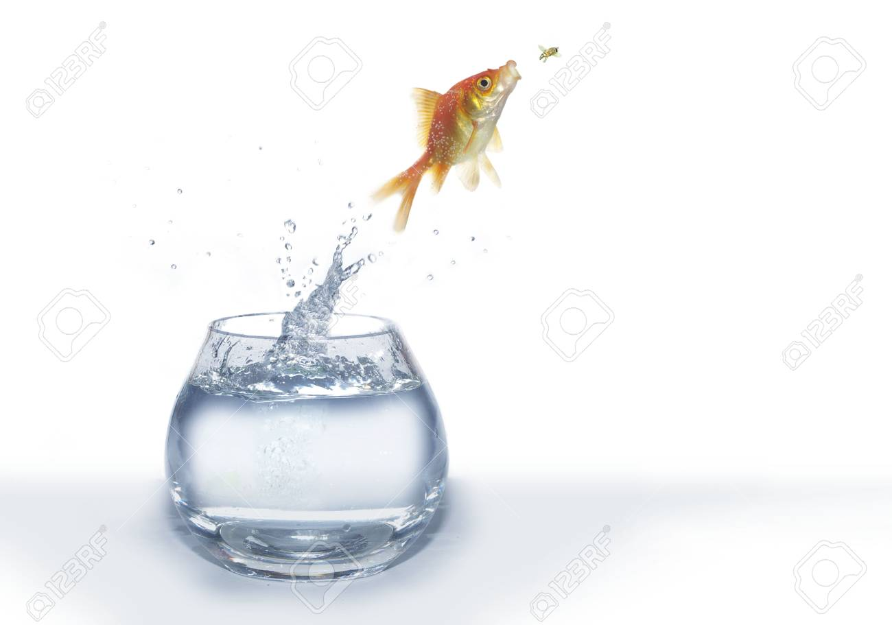 the hunting of gold fish on fly on white background Stock Photo - 5483656