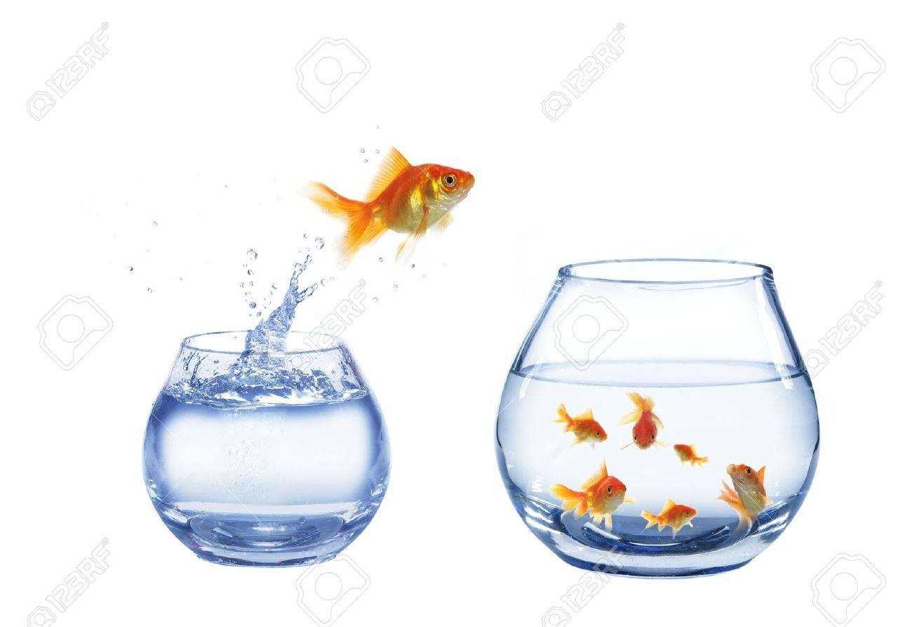 gold jump over to larger aquarium fish - 5566353