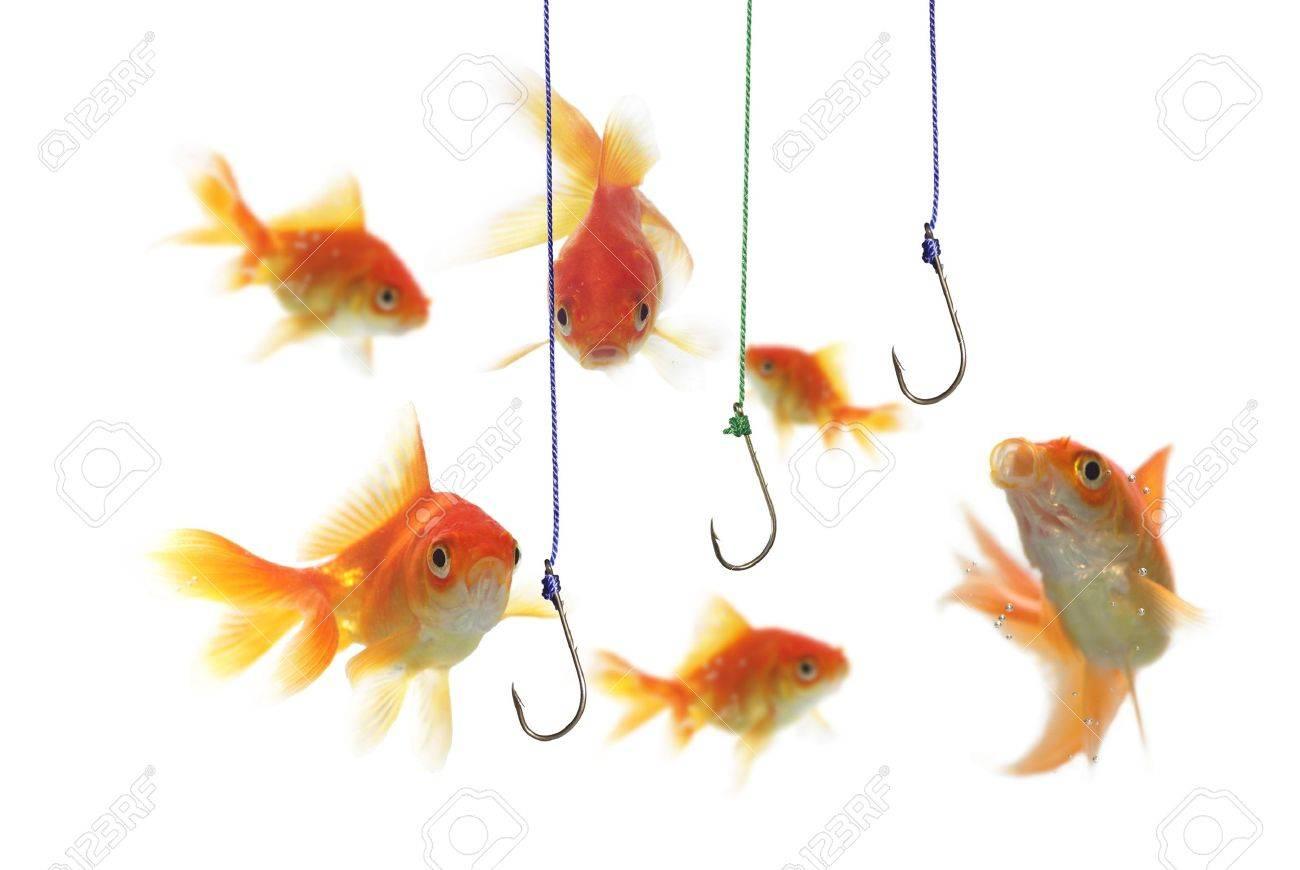 gold fish and empty hooks  on white background Stock Photo - 5579261