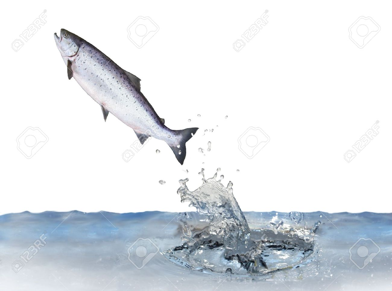 jumping fish images u0026 stock pictures royalty free jumping fish