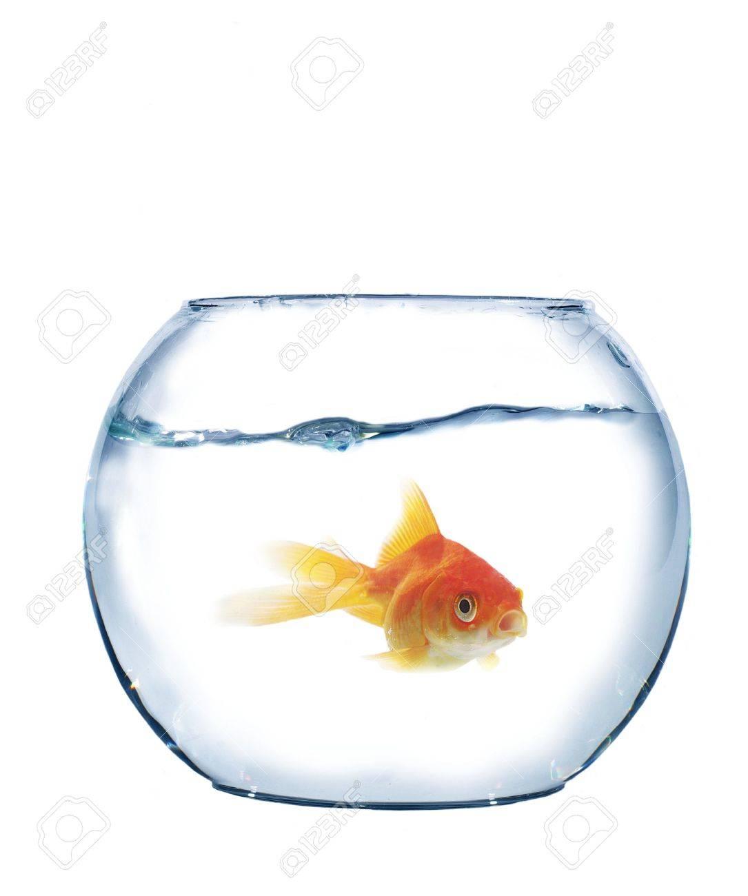 fish in spherical aquarium on white background - 6236706