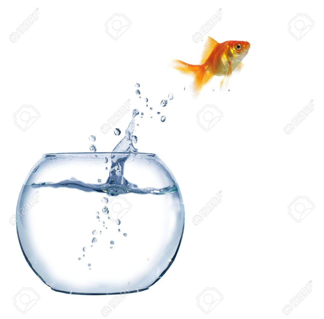 jumping out fish from aquarium on white background - 6236709