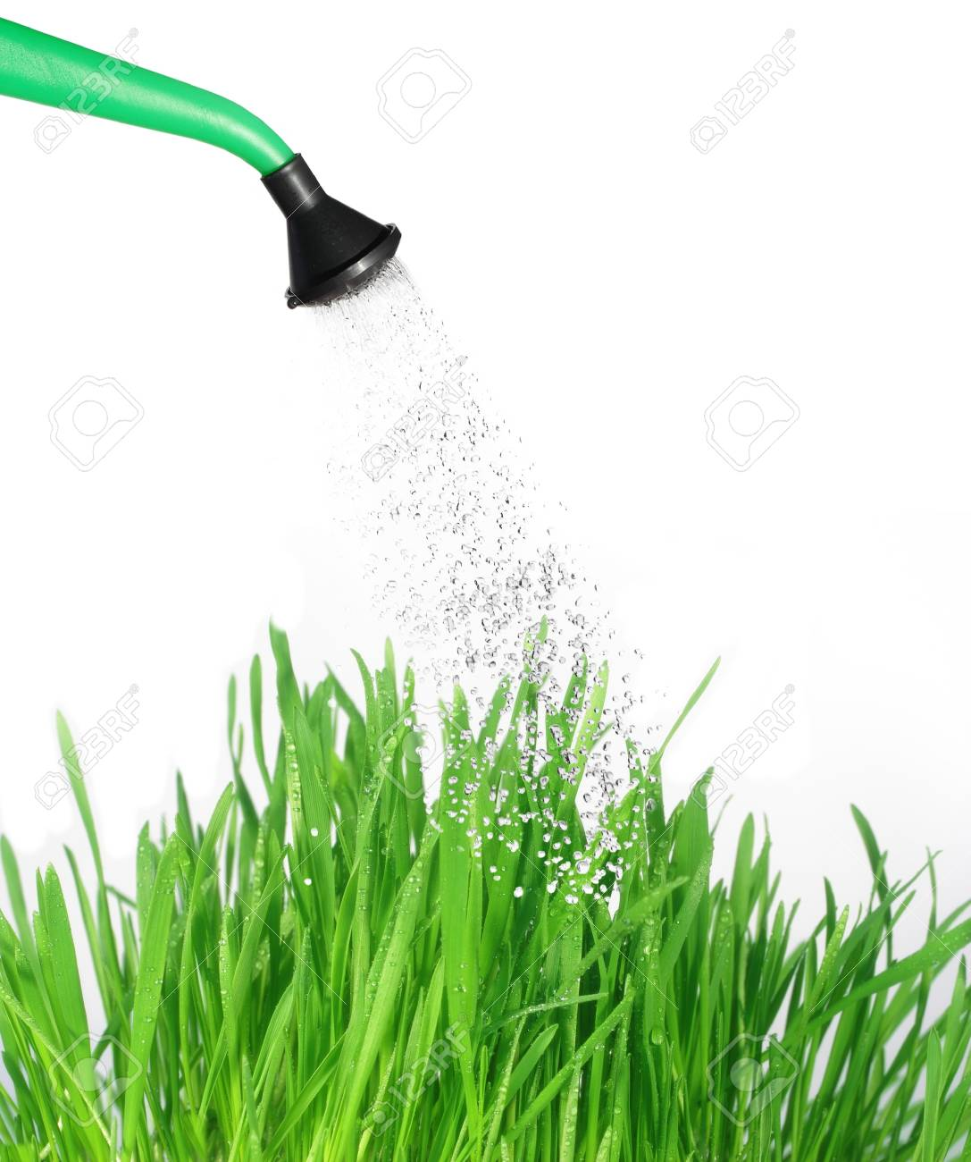 watered from watering can with water grass - 7022194