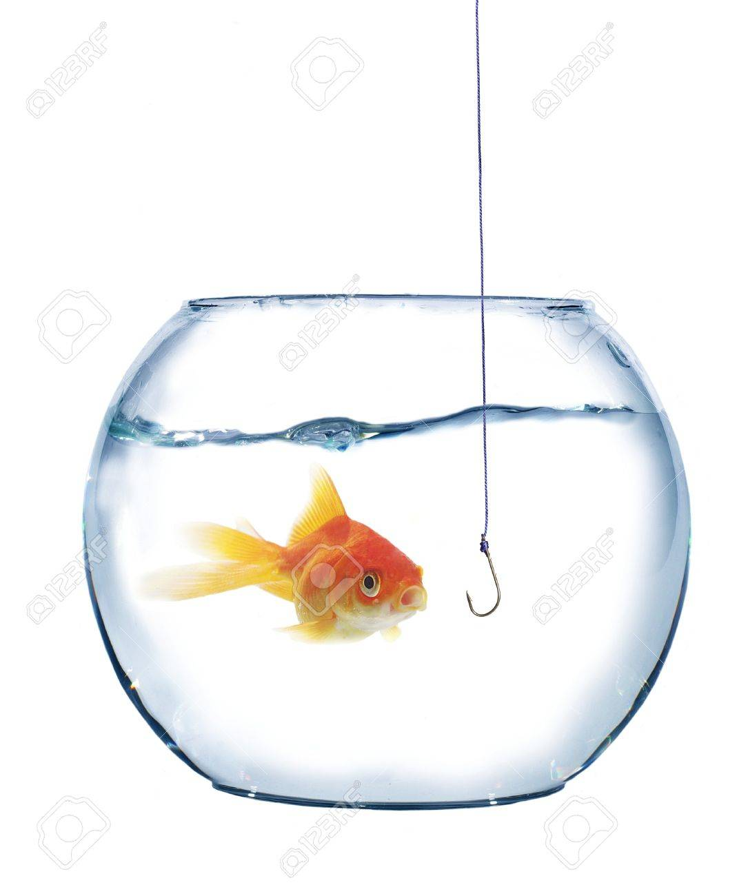 gold fish and empty hook on white background Stock Photo - 7906533