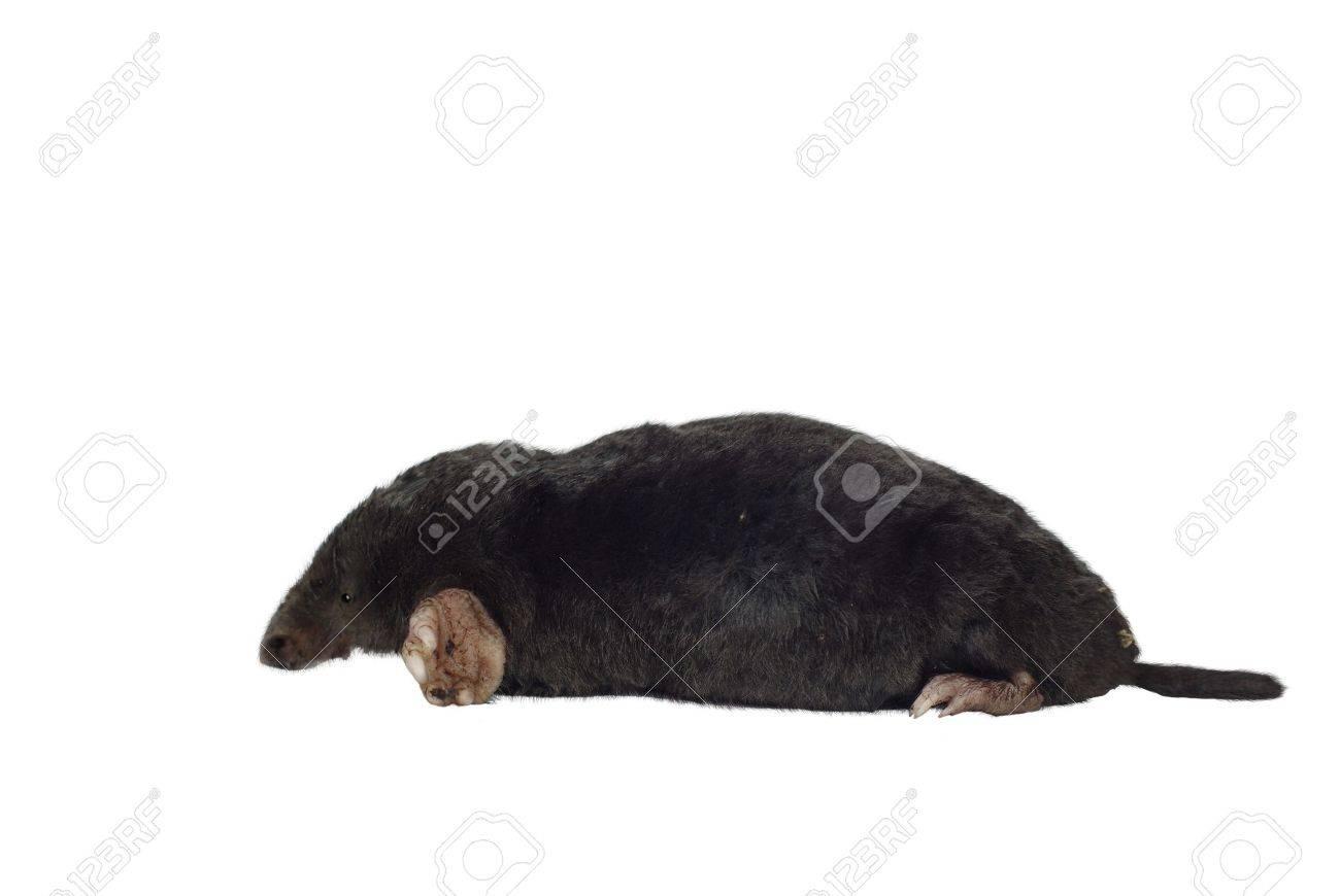 black mole on white background - 7906539