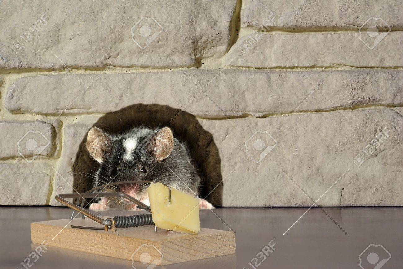 mouse and trap on stone background - 8725729