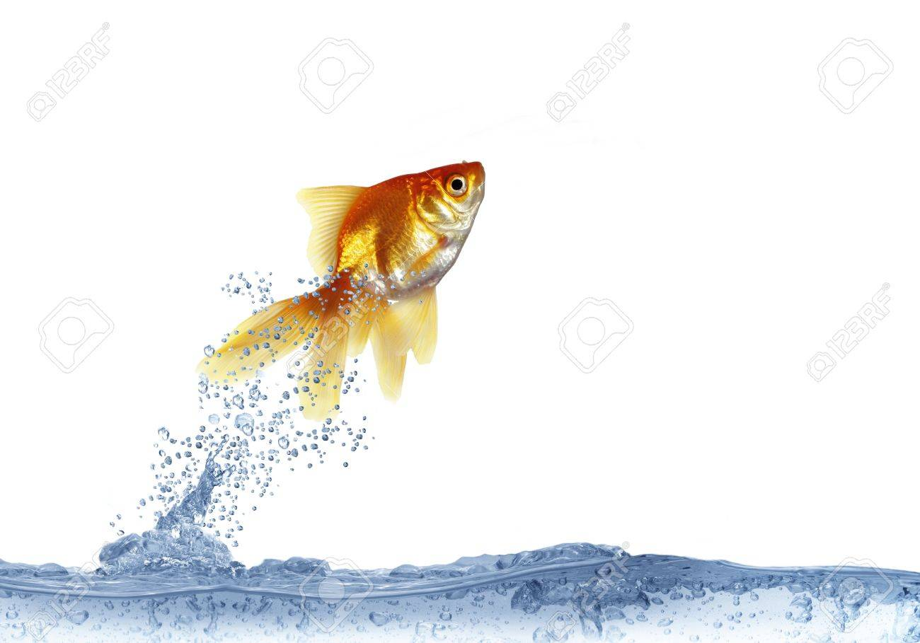 jumping out fish on white background Stock Photo - 9989066