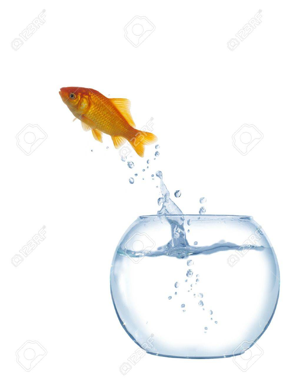 jumping out fish from aquarium on white background Stock Photo - 14408408
