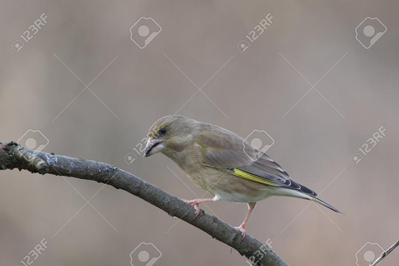 bird siskin on branch on a forest background - 165793193
