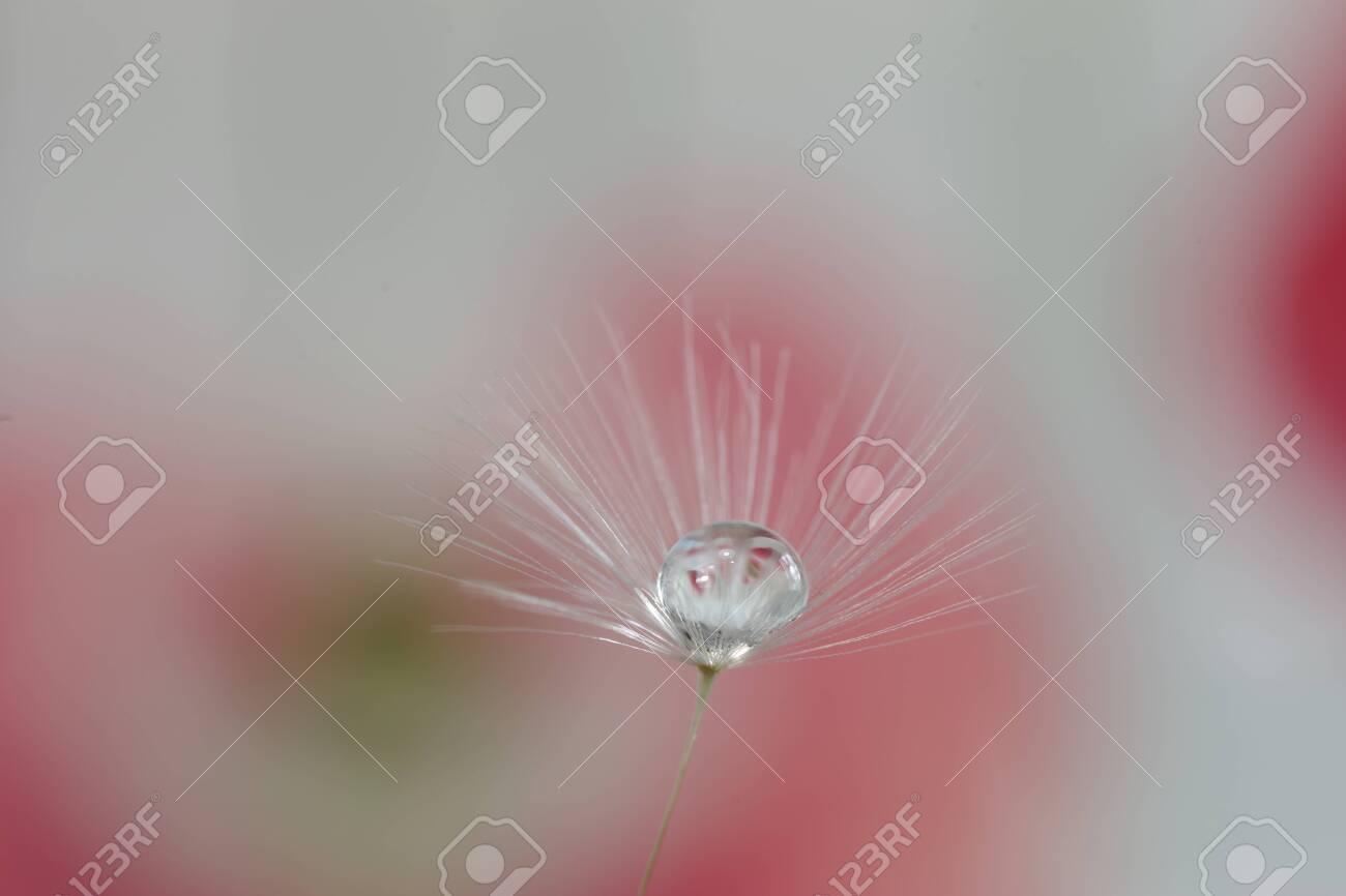 dandelion seed with water droplets macro - 146682768