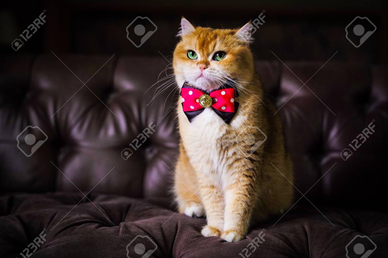 Divano Arancione E Marrone : Gatto arancione carino seduto su un divano marrone foto royalty free