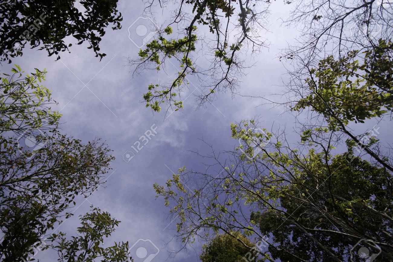 The green trees and leaves with the blue sky. Stock Photo - 12304195