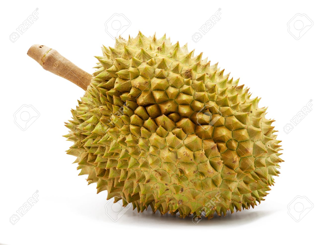 Durian Isolated On White Background Stock Photo, Picture And ...