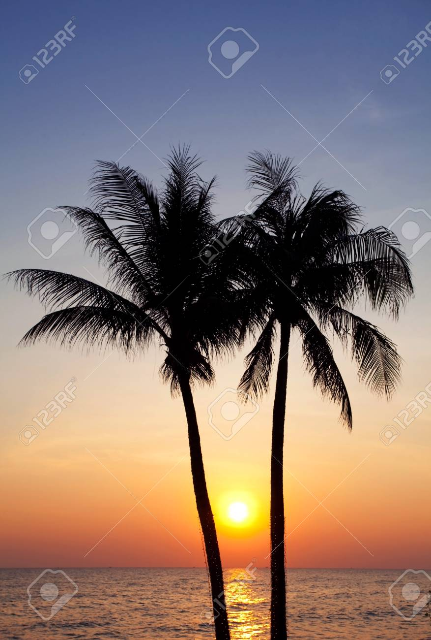 Palm forest silhouettes on sunrise Stock Photo - 9734449