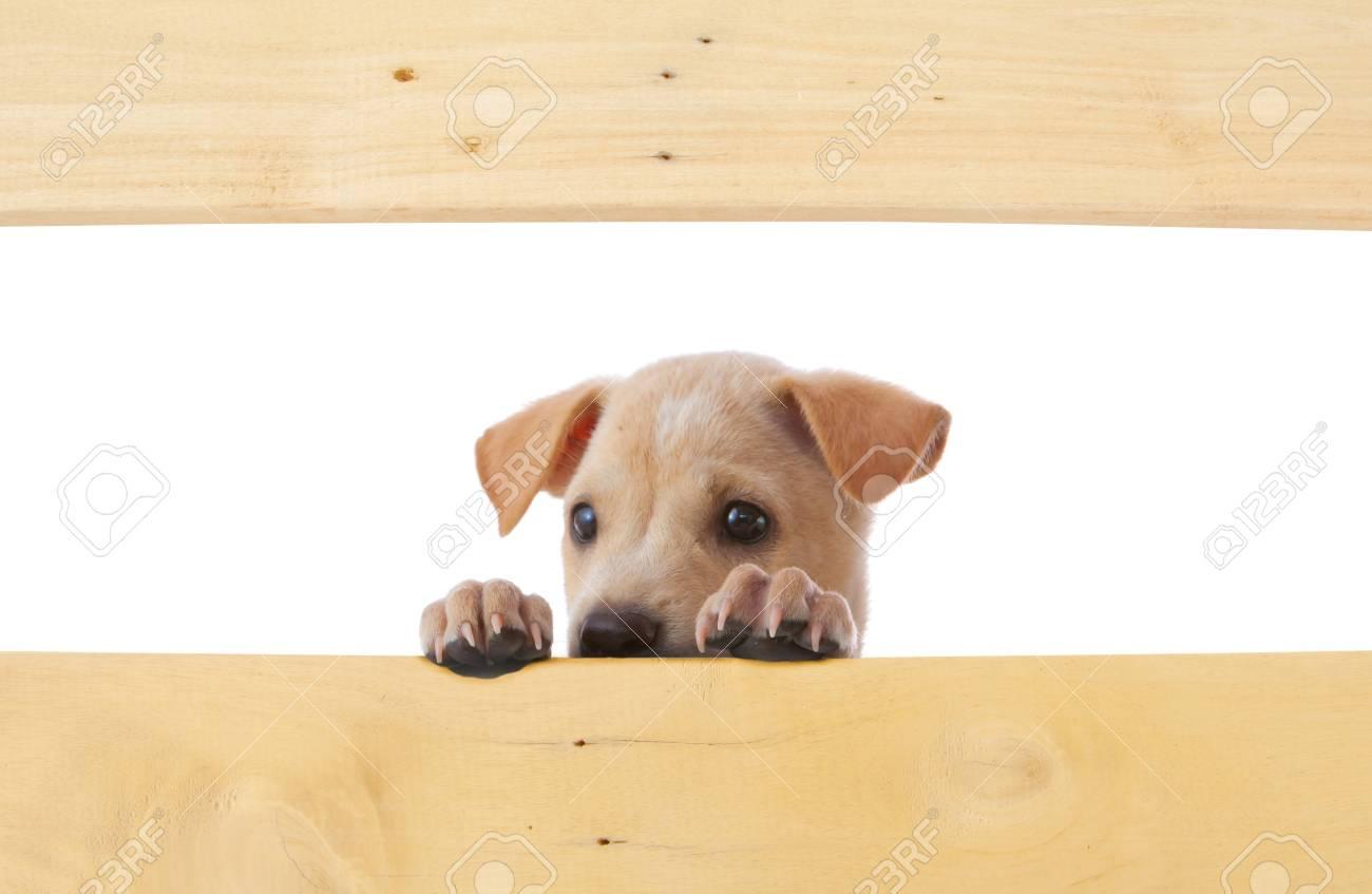 dog with empty frame on white background Stock Photo - 15587607