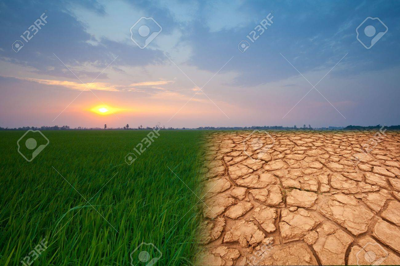 landscape with beautiful sunset and dry field - 19747718