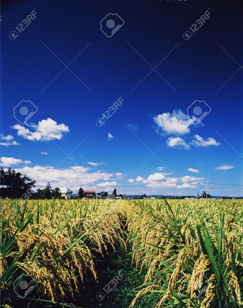 Crop Stock Photo - 237817
